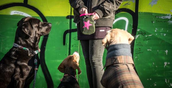 Leckerlibeutel-fütterung-hunde