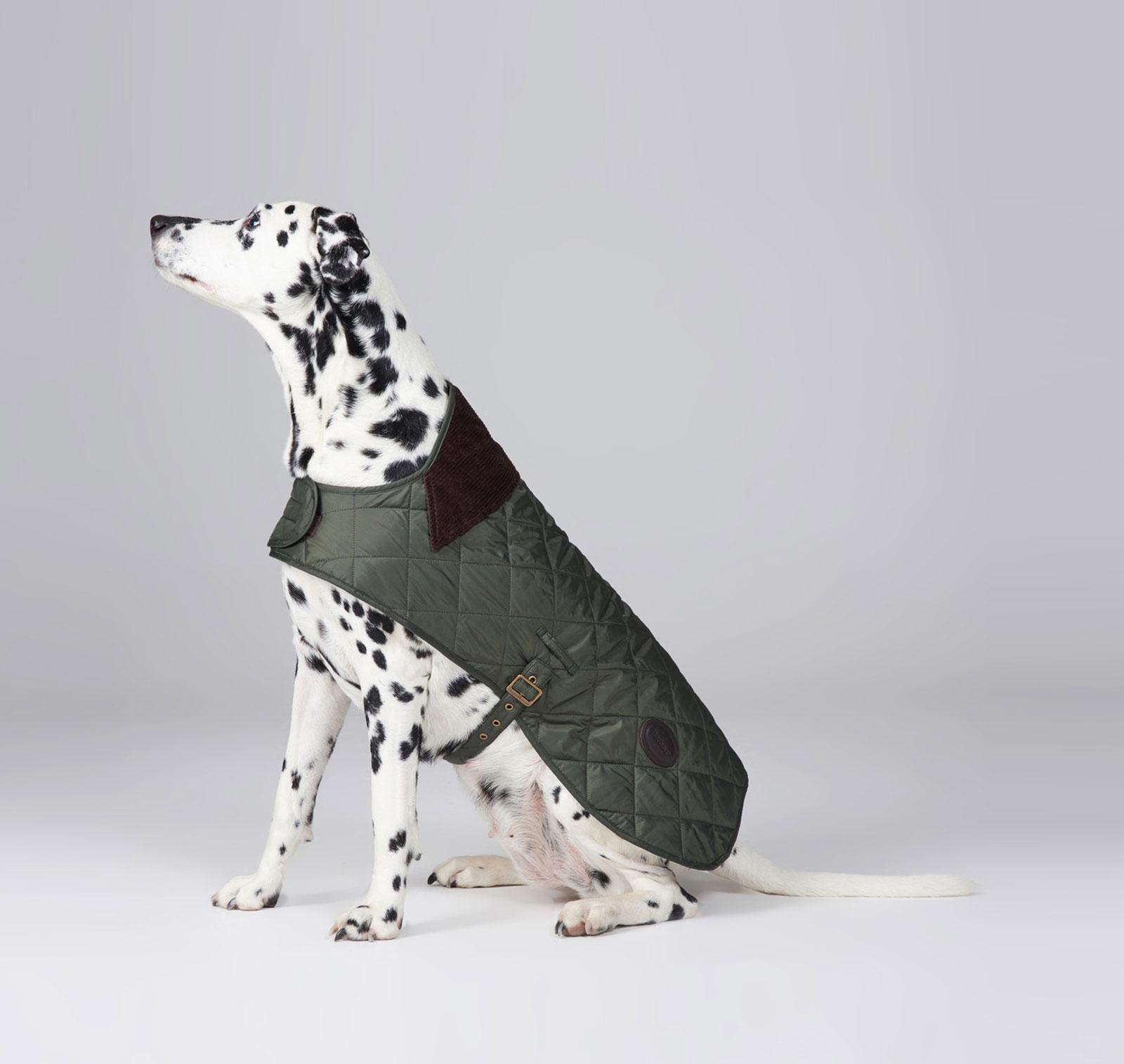 Hundemantel-barbour-quilted-boy-dog-coat-oliv