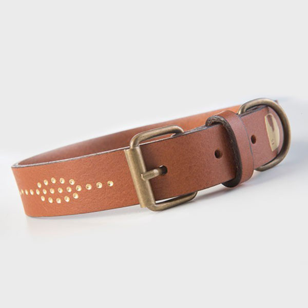 Hundehalsband-buddysdogwear-collar-golden