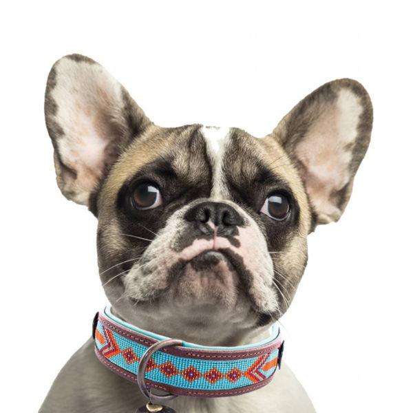 Hundehalsband-dwam-paddy-lee-s-2